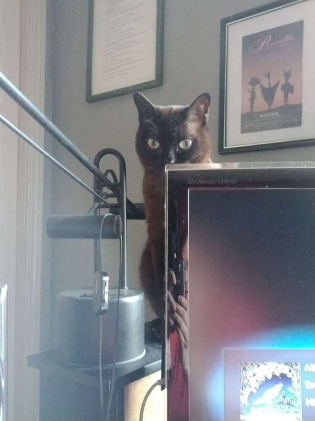 "Ares perched over the monitor ""administrating"" my actions."